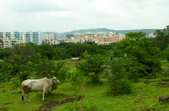 Pune city-The blend of an urban and rural Royalty Free Stock Photos