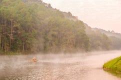 Pungência-ung, floresta do pinho Fotografia de Stock Royalty Free