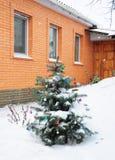 Pungen Picea сини елевое с красочным украшением шариков рождества в саде Рождественская елка внешняя в снеге Стоковое Изображение RF