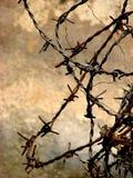 PUNGENTE! Fotografia Stock Libera da Diritti