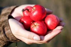 Punhado das maçãs Foto de Stock Royalty Free