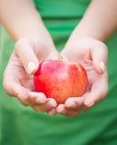 Punhado das maçãs Mulher que guarda maçãs nas mãos Imagem de Stock Royalty Free