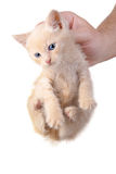 Punished kitten Royalty Free Stock Image