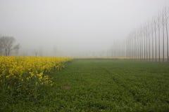 Punjabi agriculture Royalty Free Stock Photos