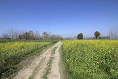Punjabi mustard fields Royalty Free Stock Image