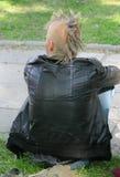 Punker en una hierba Fotos de archivo