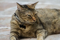 Punkin il gatto Fotografie Stock Libere da Diritti