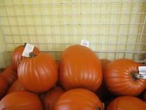 Punkins que crece en la yarda para Halloween Imágenes de archivo libres de regalías