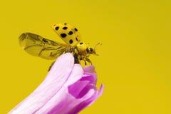 22 punktów ladybird Zdjęcie Stock