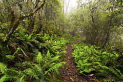 Punkt-Ausblick, Neu-England Nationalpark, AU lizenzfreies stockfoto