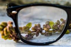 Punkt av sikten Fotografering för Bildbyråer