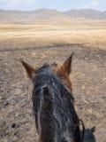 Punkt av sikten sköt av ett basutoponnyhuvud från ett hästryttareperspektiv, berg av Lesotho, Afrika Royaltyfria Bilder