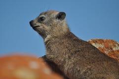 punkt obserwacyjny królika skała Fotografia Royalty Free
