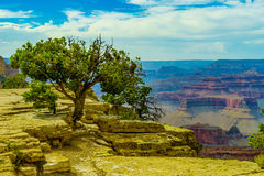 Punkt och amfiteater för Grand Canyon nationalparkmoder Royaltyfri Foto