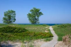 Punkt-Strand-Zustands-Wald Stockfoto