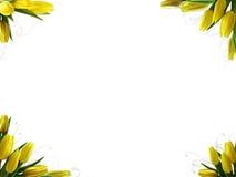 punkt wiosna Zdjęcia Stock