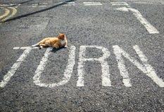 Punkt zwrotny z kotem na drodze Zdjęcie Stock