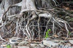 PunktAuRoche delstatspark Royaltyfri Fotografi