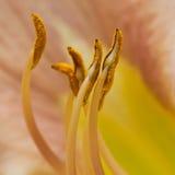 Punkte des Blütenstaubs Stockfotos