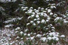 Punkte des neuen Schnees stockbild
