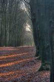 Punkte des Tageslichtes auf Herbstblättern. Lizenzfreie Stockfotos