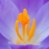 Punktiert mit dem Blütenstaub Lizenzfreie Stockfotos