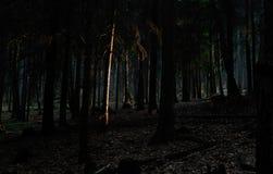 Punktleuchte im Holz Lizenzfreies Stockbild