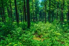 Punktu widzenia zbocze góry zakrywający z lasem i krzakami Fotografia Stock