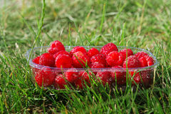 Punnet of raspberries. Side view of plastic punnet of raspberries, green grass background Royalty Free Stock Photography