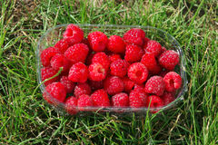 Punnet of raspberries. Punnet of ripe raspberries on grass Stock Image