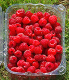 Punnet of raspberries. Punnet of ripe, red raspberries with grass background Stock Photos