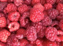 Close up of raspberries. A punnet of raspberries stock photos