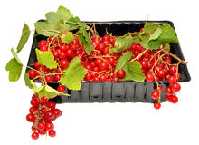 Punnet Of Redcurrants Stock Image