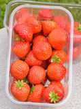 Punnet of Strawberries Stock Image