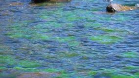 Puno tur på sjön Titicaca lager videofilmer