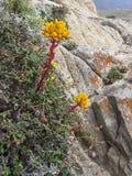 Punt Lobos, Californië stock afbeelding