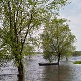 Punt moored to tree in flood Royalty Free Stock Photo