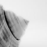 Punt van een kroonslak in Zwart-wit royalty-vrije stock afbeelding