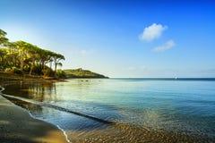Punta alun, sörjer trädgruppen, stranden och havsfjärden italy tuscany Arkivbilder