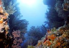 Punta Bequia de la almendra Imagen de archivo libre de regalías