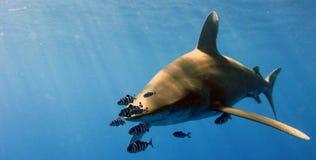 Punta bianca oceanica Immagini Stock