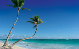 Punta cana royalty free stock images