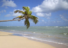 Punta cana beach Stock Photos