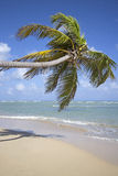 Punta cana beach Royalty Free Stock Photo