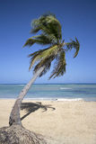Punta cana beach Royalty Free Stock Images