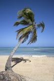 Punta cana beach Royalty Free Stock Images