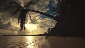 Punta Cana dark silhouette of palm tree sandy beach sunrise stock video