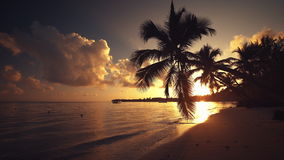 Punta Cana dark silhouette of palm tree sandy beach sunrise.  stock video