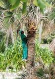Punta Cana, Dominican Republic - circa October Stock Photo
