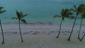 Punta Cana playa. Aerial view of tropical island beach and palm trees.  stock video footage